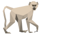 BaBa Baboon your guide to what\'s on