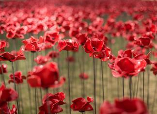 Poppies installation