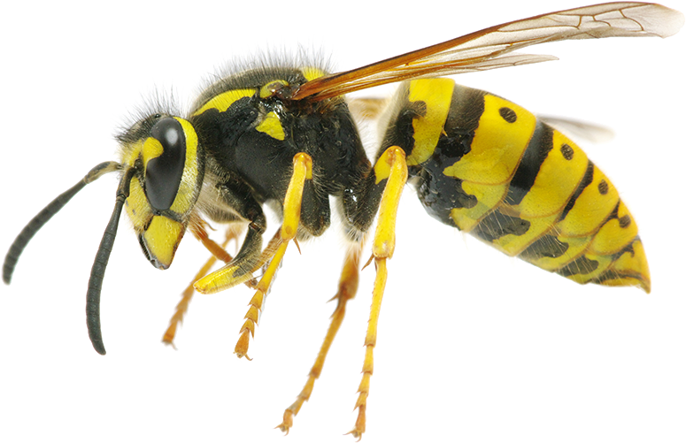 wasp-feature